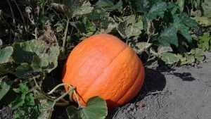 Щедрые брянцы накормили овощами и фруктами 19 пожилых людей