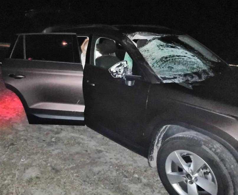 В Навлинском районе автомобиль Skoda Kodiaq сбил на трассе лося