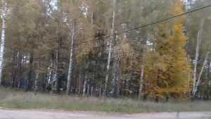 В Мглинском районе возле школы провис высоковольтный кабель