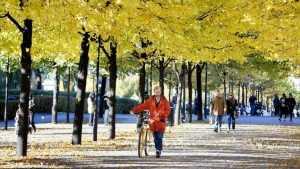 В четверг в Брянске продлится сухая осенняя погода