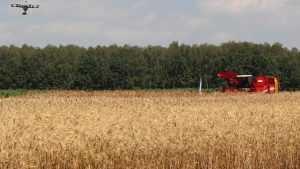 Сельское производство Брянской области выросло на 1,9 процента