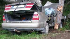 В Сельцо во время погони «Вольво» протаранила дерево – ранена женщина