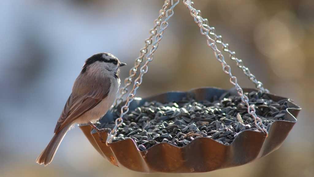 Брянский зоопарк объявил детский конкурс на лучшую кормушку для птиц