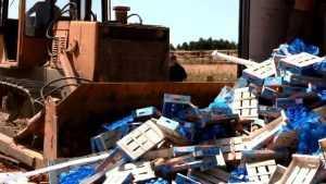В Брянской области уничтожили 400 тонн санкционных овощей и фруктов