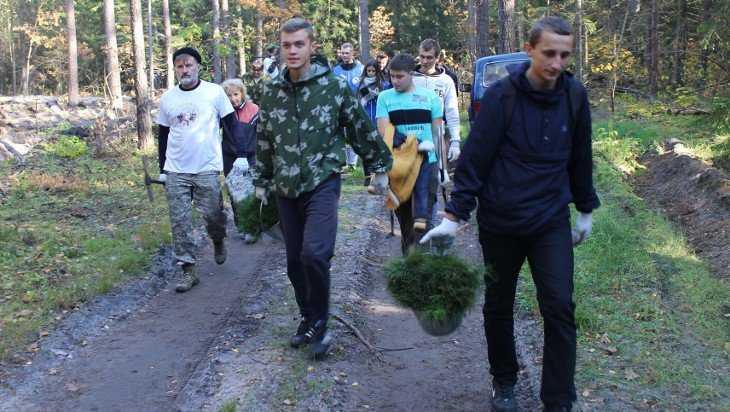 В брянском лесу посадили более 4000 сосен