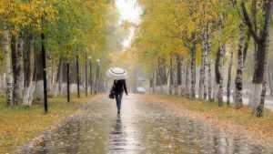 В среду в Брянске синоптики обещали дождливую погоду