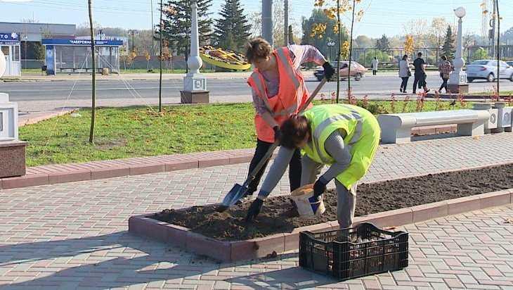 В Брянске на клумбах в будущем году зацветут тысячи тюльпанов