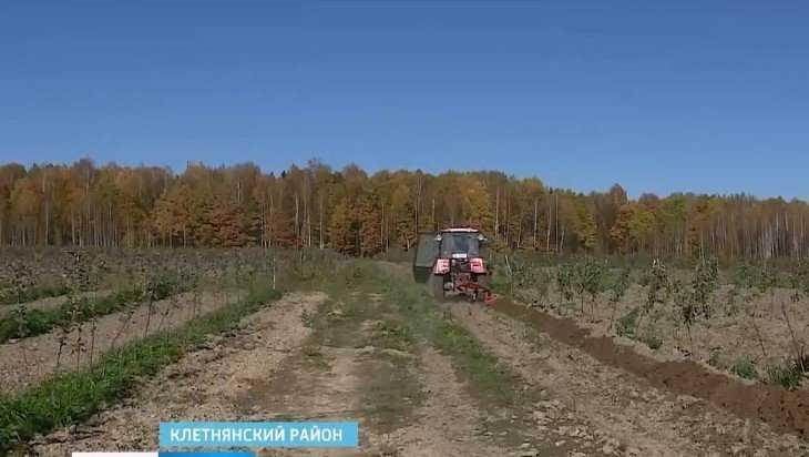 В Клетнянском районе разбит «сербский» сад из 70 тысяч яблонь