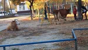В брянских соцсетях опубликовали фото коров, разгуливающих по городу