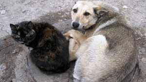 Бродячих собак в Брянске будут стерилизовать и отправлять в приюты