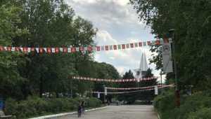 В Брянске на Кургане Бессмертия высадят 40 молодых лип