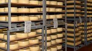 Стародубский сыр удивил экспертов