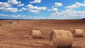 В Швеции поразились сельскохозяйственным успехам России