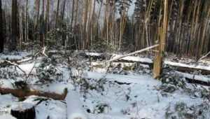В Карачевском районе неизвестные вырубили лес на 570 тысяч рублей
