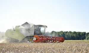 Доля сельского хозяйства в брянском валовом продукте выросла в 2,5 раза