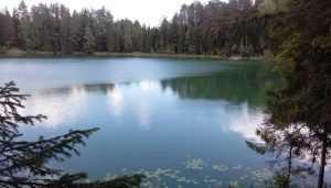 Брянский департамент экологии забыл о захламлённых памятниках природы