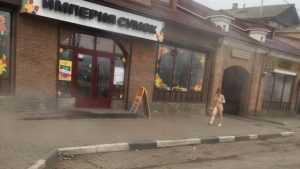 В центре Брянска сняли видео прогулки голой девушки