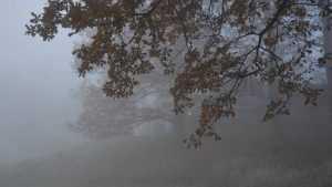 Брянской области 10 ноября пообещали моросящий дождь и туман