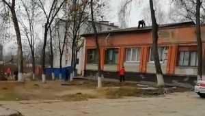 В Брянске голый наркоман сорвался с крыши общежития