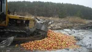 В Брянской области трактором раздавили 727 кг сомнительных яблок