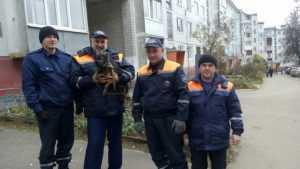 Брянские спасатели вызволили замурованную собачью семью