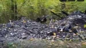 Прокуратура отреагировала на видео свалок сгоревшей мебели в Белых Берегах