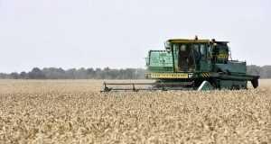 Брянское сельское хозяйство в 2019 году вырастет на 8 процентов