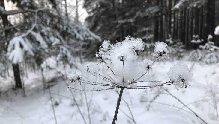 В Брянской области потеплеет и пойдет мокрый снег