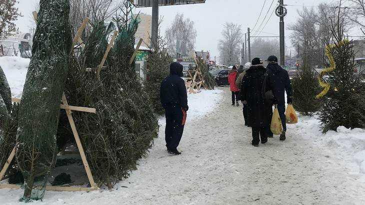 «Елочка мне нравится?!»: в Брянске началась продажа лесных красавиц
