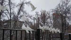 В Брянске выбросили на мороз стаю белых голубей