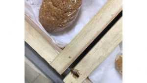 Тараканы на полке с хлебом в магазине возмутили брянцев