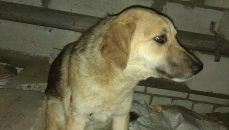 В Белых Берегах неизвестные живодёры расстреляли собаку