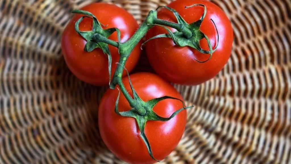 Брянские инспекторы вернули туркам 19 тонн опасных помидоров