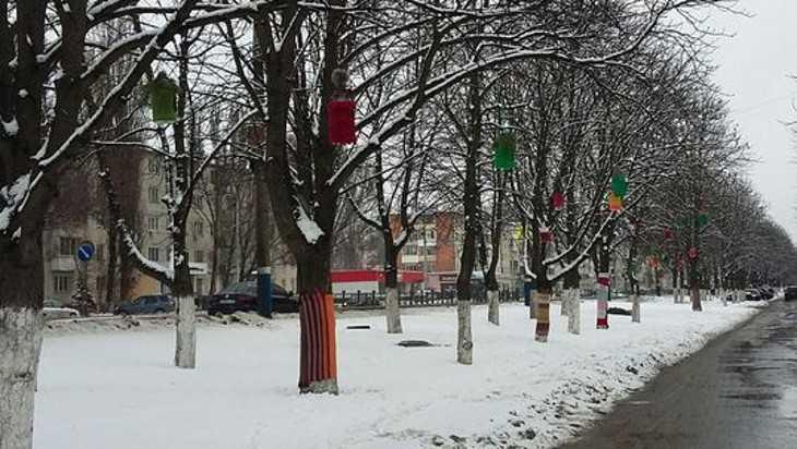 В Брянске деревья украсили радужными шарфами и кормушками