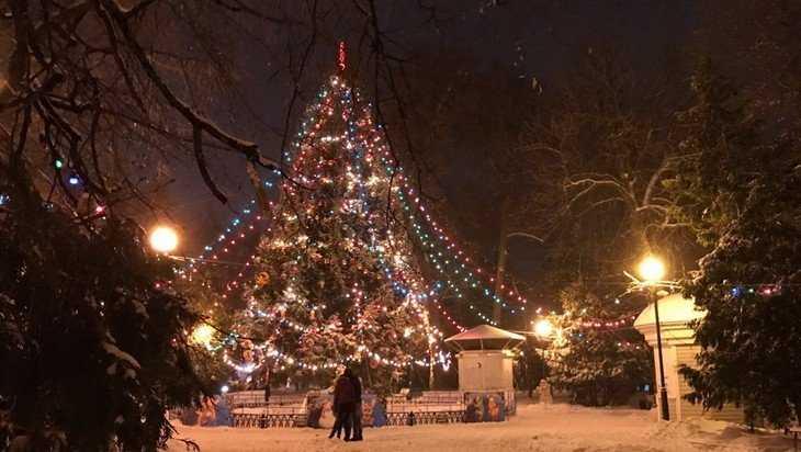 Жители Брянска выбрали главную ёлку города