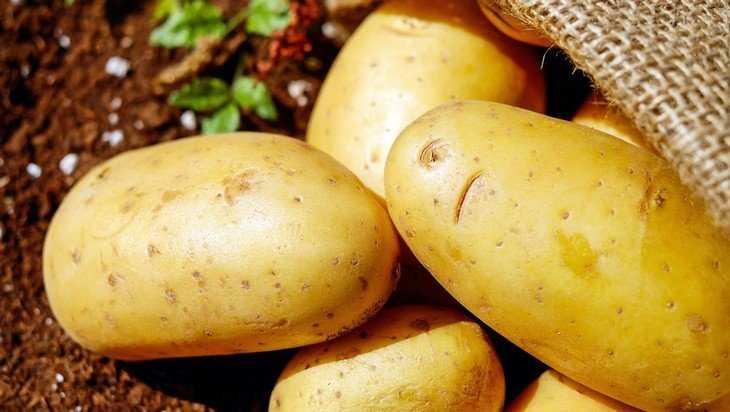 Специалисты сказали правду о брянском картофеле