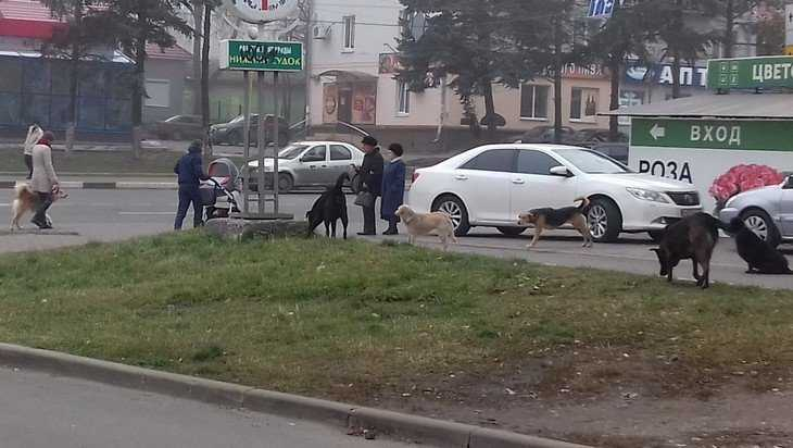 В центре Брянска свора собак стала нападать на женщин с колясками