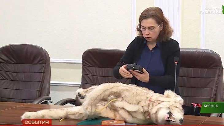 Брянский университет отказался от опытов над животными