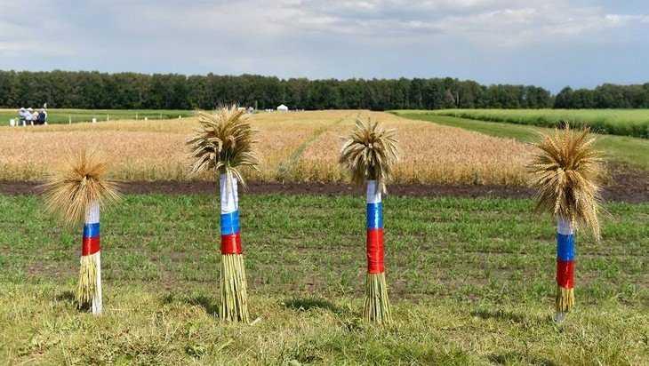Сельское производство Брянской области вырастет на 17 процентов