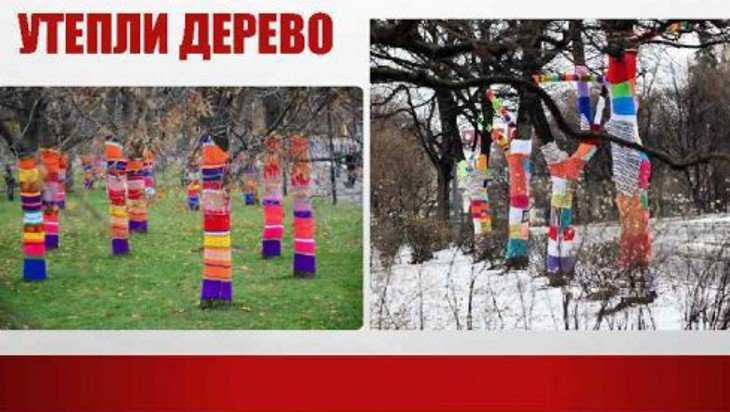 Жителей Почепа призвали утеплить деревья в парке