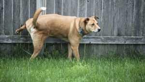 Брянских собачников обязали убирать на улице за своими питомцами