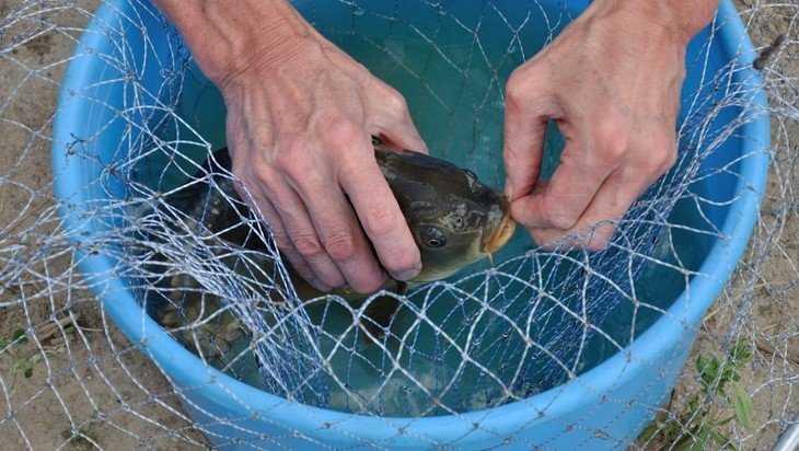 В Росрыболовстве назвали самую полезную в мире рыбу