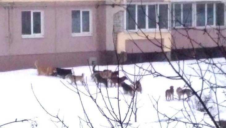 В Брянске улицу Почтовую захватили 17 агрессивных собак