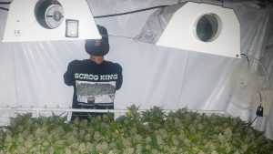 В Брянске осудят владельца оранжерей наркотических кактусов и конопли
