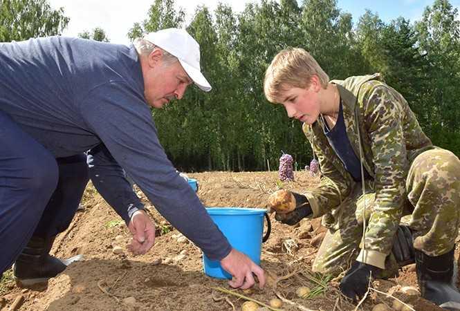Лукашенко приказал перерабатывать в Белоруссии нефть из Прибалтики