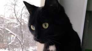 В Брянске живодёры расстреляли кота из пневматики