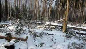 Жителя Брянского района осудят за вырубку леса на 19 млн рублей