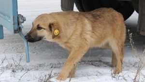 В Брянске три миллиона рублей потратят на бродячих собак