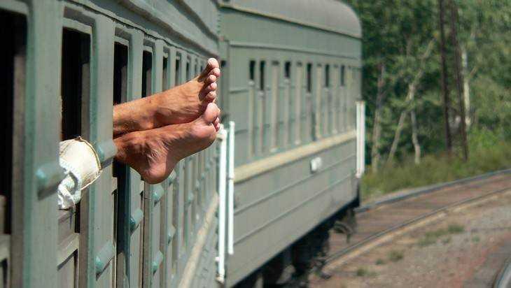 Брянские ветеринары показали видео о том, что находят в поездах