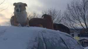 Собаки на крыше автомобиля позабавили брянцев